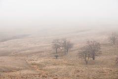 mgła Fotografia Stock