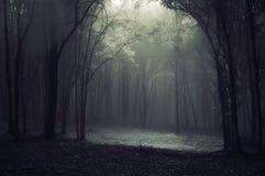 mgła las Obraz Royalty Free