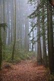 Mgła las Zdjęcia Royalty Free