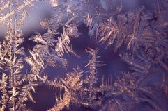 Mágica e beleza do inverno congeladas na janela O renascimento do conto de fadas do inverno Foto de Stock Royalty Free