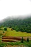 mgiełek łąki Zdjęcia Stock