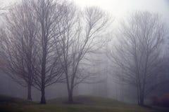 mgieł drzewa Zdjęcie Royalty Free