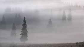 mgieł drzewa Obraz Royalty Free