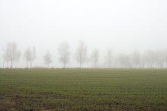 mgieł drzewa Obrazy Royalty Free