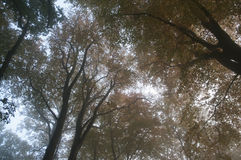 Mgliści jesieni drzewa wierzchołki Obraz Royalty Free