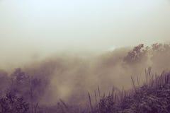 Mgliści tła zdjęcie stock
