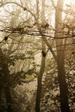 mgliści drzewa Zdjęcie Royalty Free