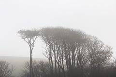 Mgliści Drzewa Zdjęcia Stock