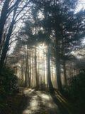 mgliści drzewa Obrazy Royalty Free