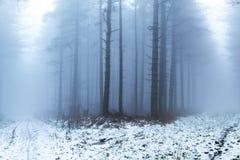 Mgliści lasy w zimie Fotografia Royalty Free