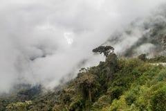 Mglista dżungla w górach pod Abra Malaga przepustką obraz royalty free