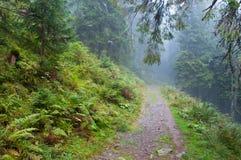 Mglista droga przez lasu Zdjęcia Royalty Free