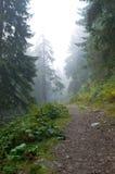 Mglista droga przez lasu Zdjęcie Royalty Free
