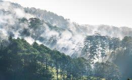 Mglista góra na Da Lat średniogórzu w Wietnam Zdjęcia Royalty Free