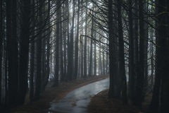 Mglista lasowa droga Obraz Royalty Free