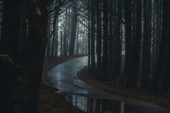 Mglista lasowa droga Zdjęcia Royalty Free