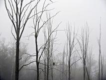 Mglista mgła otacza Łysego Eagle na gałąź w bagnie zdjęcia royalty free