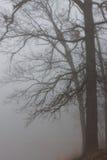 mgliste drzewa Zdjęcia Royalty Free