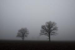 mgliste drzewa Fotografia Royalty Free
