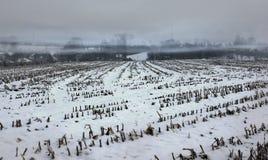 Mglisty śnieg zakrywający pusty kukurydzany pole Zdjęcie Stock