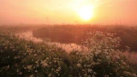 Mglisty świt na brzeg rzeki z pięknymi kwiatami zbiory wideo