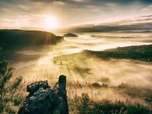 Mglisty budzić piękna czarodziejska dolina Szczyty skały żyłują śmietankową mgłę Zdjęcie Stock