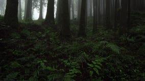 Mglisty Cyprysowy las w Alishan Scenicznym terenie z mg?? i mgie?k? w Tajwan zbiory
