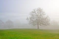 mglisty drzewo Obraz Royalty Free