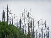 Mglisty jesień ranek nad śmierć las na skalistym wzgórzu Susi bagażniki wtykają up fotografia stock