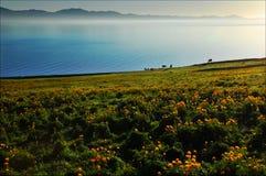Mglisty jezioro z łąką obrazy stock
