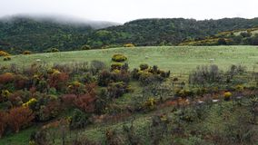 Mglisty krajobraz Catlins blisko kanibal zatoki, Nowa Zelandia zdjęcia royalty free
