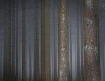 Mglisty las Obrazy Stock