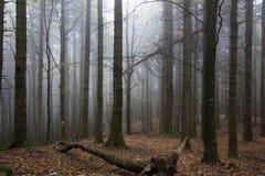 Mglisty las z mgłą zdjęcia royalty free