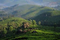 Mglisty Lockhart herbaty park i nieruchomość w wczesnym poranku, Munnar, Kerala, India zdjęcie stock