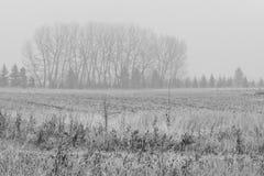 Mglisty Monochromatyczny Drzewnej linii krajobraz Obrazy Royalty Free