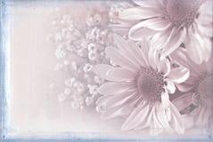 Mglisty różowy stokrotka bukiet zdjęcia royalty free