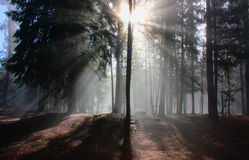 Mglisty ranek blisko Dźwigowej prerii Zdjęcia Royalty Free