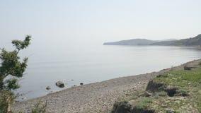 Mglisty ranek na seashore Osamotniony drzewo r na krawędzi opustosza?y pla?a otoczak zdjęcie wideo