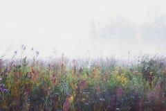 Mglisty ranek W łące fotografia stock