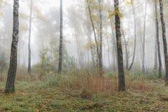 Mglisty ranek w drewnach w spadku Ranek, jesień Obraz Royalty Free