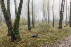 Mglisty ranek w drewnach w spadku Ranek, jesień Zdjęcie Royalty Free