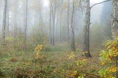 Mglisty ranek w drewnach w spadku Ranek, jesień Obrazy Royalty Free