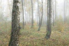 Mglisty ranek w drewnach w spadku Ranek, jesień Zdjęcia Royalty Free