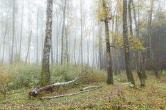 Mglisty ranek w drewnach w spadku Ranek, jesień Fotografia Royalty Free