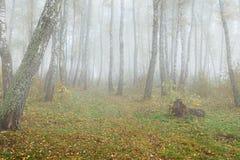 Mglisty ranek w drewnach w spadku Ranek, jesień Obrazy Stock