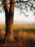Mglisty ranek w polu fotografia royalty free
