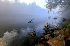 Mglisty ranku brzeg rzeki z dziką gąską Fotografia Royalty Free