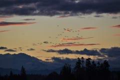 Mglisty ranku wschód słońca Obraz Royalty Free