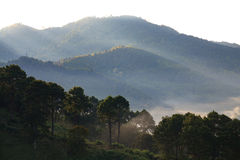 Mglisty ranku wschód słońca przy Doi angkhang górą, chiangmai: tajlandzki obrazy stock