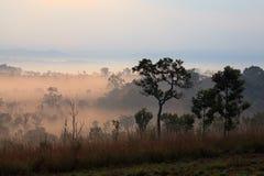 Mglisty ranku wschód słońca przy Thung Salang Luang parkiem narodowym Phetch fotografia royalty free